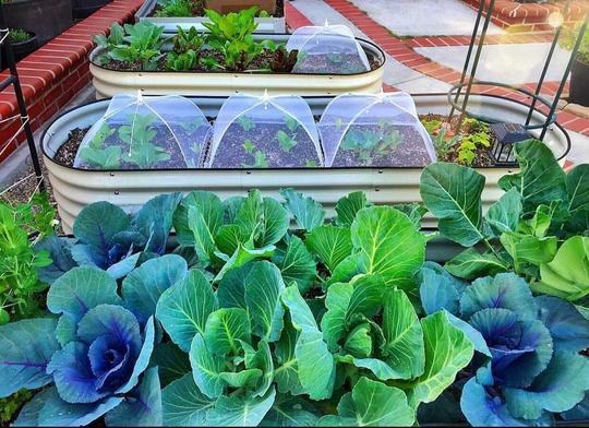 Raised Garden Beds Advantage and How To Choose One For You