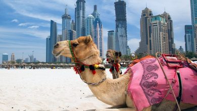 Top Things To Do In UAE